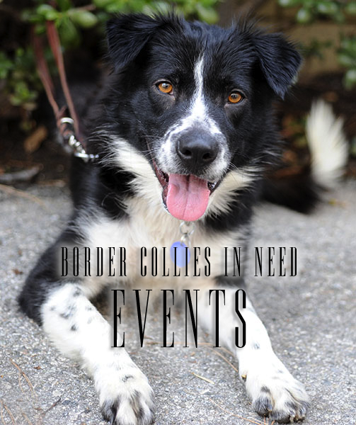 Border Collie Rescue and Adoption from Border Collies In