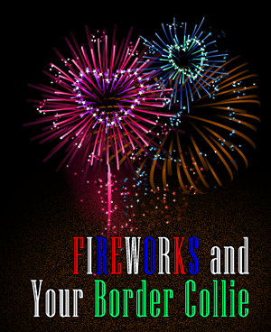 Border Collies In Need: Your Border Collie & The 4th of July